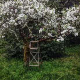 ip_apple_tree_ladder3