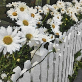 ip_daisies_and_pickets