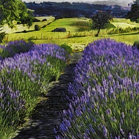 ip_lavendar_and_vineyard