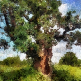 ip_old_tree_4