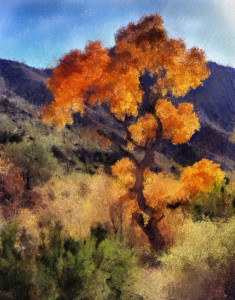Image of a tree in fall color in Sabino Canyon, Tucso, AZ